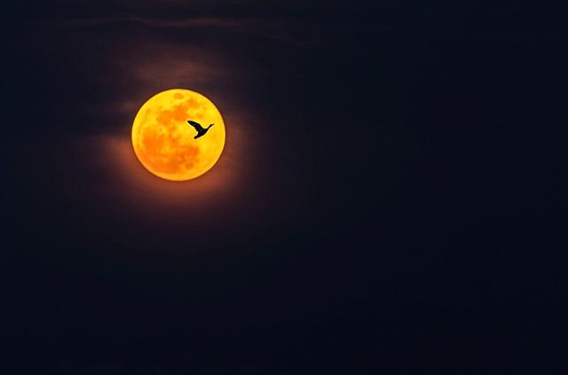 朗月高悬圆自个,奈何笔下认孤独