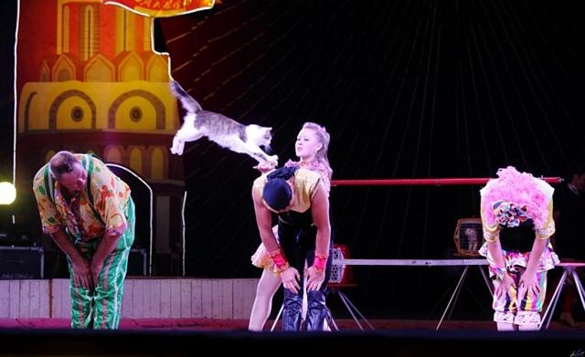 皇家马戏,高端的艺术飨宴