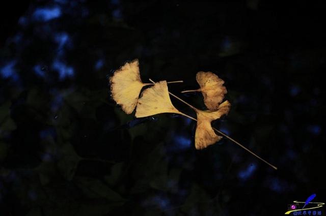 【实拍】随州浓妆淡抹的秋色