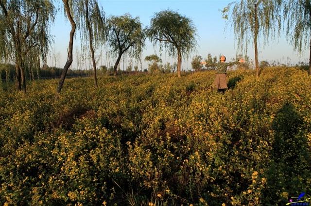 济西湿地秋色风光好