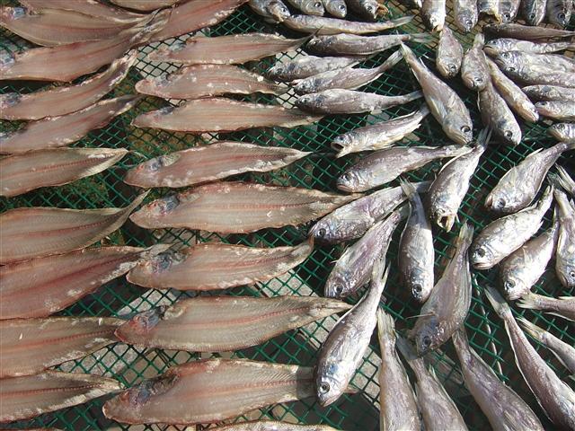 不二忆旧:海岛人过年的鱼鲞,